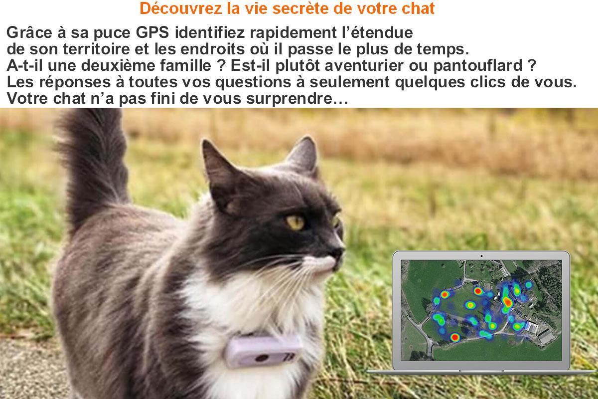 Collier traceur GPS pour chat
